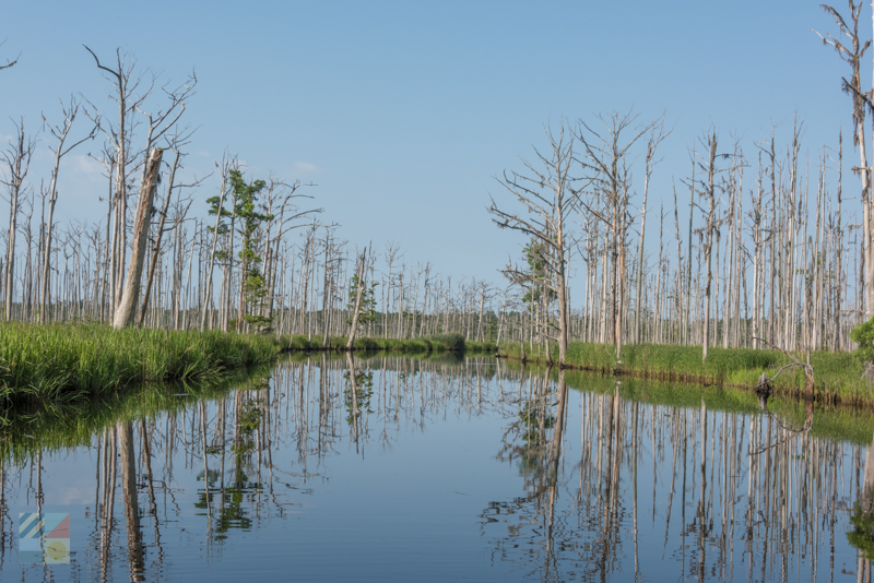 Green Swamp Preserve